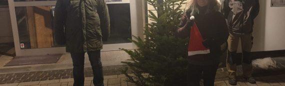Aufstellung der Weihnachtsbäume in der Innenstadt