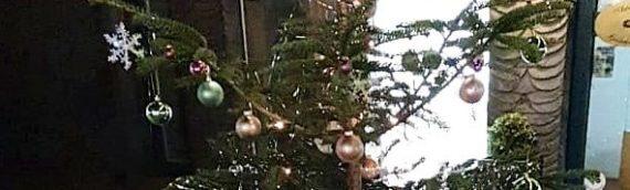 Geschmückte Weihnachtsbäume in der Innenstadt